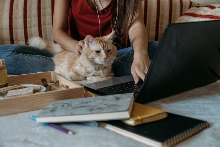Capa do artigo sobre Trabalho remoto com uma moça trabalhando de casa com um gato no colo